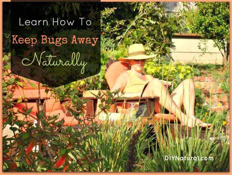 25+ Bästa Keep Bugs Away Idéerna På Pinterest
