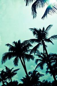 tropical pics | Tumblr