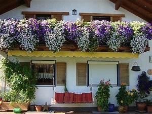 Hängepflanzen Für Balkonkästen : balkonk sten mein sch ner garten forum ~ Michelbontemps.com Haus und Dekorationen