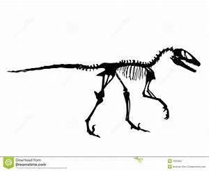 Deinonychus Fossil stock vector. Image of skeleton ...