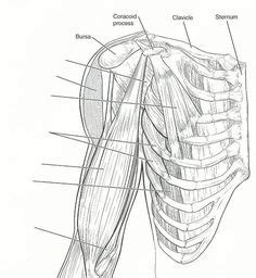 blank and neck muscles diagram muscles anatomy anatomy physiology anatomy