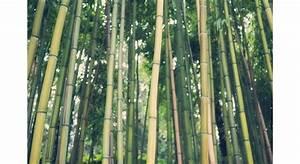 Arbuste Brise Vue : plantes brise vue conseils palissage mon jardin ma maison ~ Preciouscoupons.com Idées de Décoration