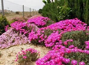 Mediterrane Pflanzen Liste : mediterrane pflanzen f r den garten ~ Watch28wear.com Haus und Dekorationen