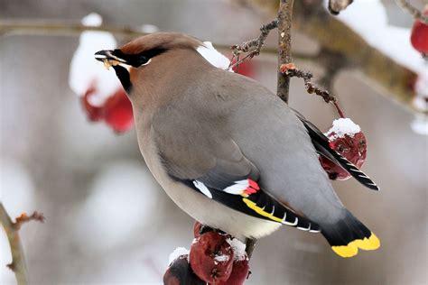 winter birds eat good winter foods
