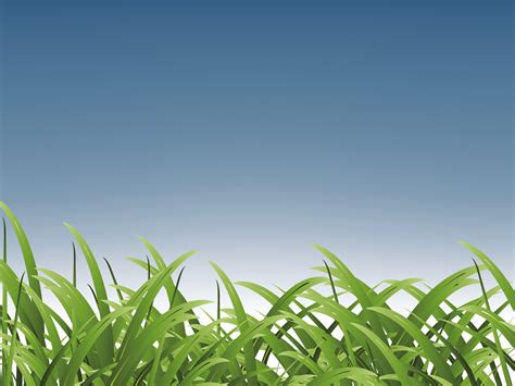 Grass for Sports Backgrounds