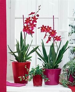 Plantes à Suspendre : plantes d int rieur plante verte int rieur d tente jardin ~ Premium-room.com Idées de Décoration