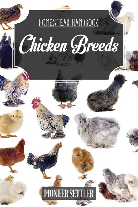 1000 images about chickens eggs coops on