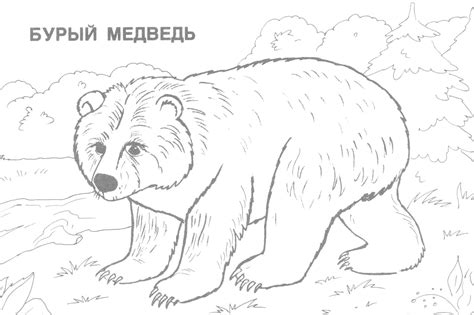 Realistic Animal Coloring Pages Online Realistic Best