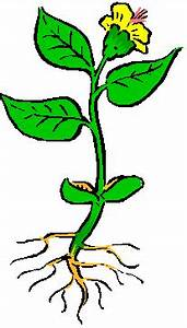 Bau Der Pflanze : die h here pflanze ~ Lizthompson.info Haus und Dekorationen