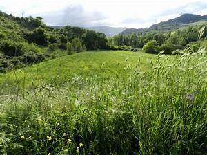 Grüne Wiese Sebnitz : pin wiese gr ne wiese rasen gras on pinterest ~ Frokenaadalensverden.com Haus und Dekorationen