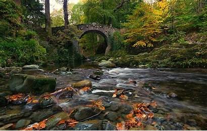 Ireland Wallpapers Forest River Autumn Park Bridge