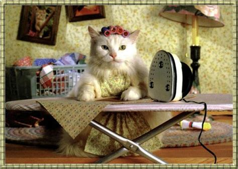 adorable cat ironing