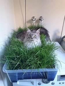 More For Cats Kratzbaum : 1000 ideas about katzengehege on pinterest diy kratzbaum outdoor cat run and katzenbaum ~ Whattoseeinmadrid.com Haus und Dekorationen