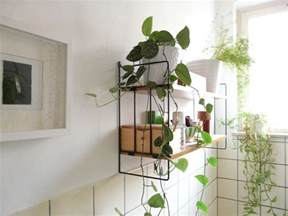 ideas to decorate bathroom best plants that suit your bathroom fresh decor ideas