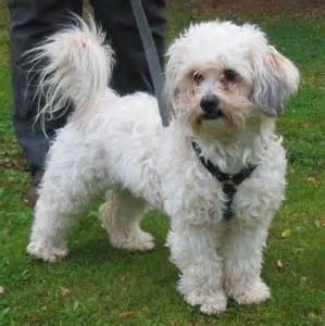 Small Dogs That Shed The Most by Gena Netherlands Dog Rescue For Dog Adoption And Dog
