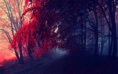 Aesthetic Fall Themed Desktop Backgrounds by 45 1440x900 Fall Desktop Wallpaper On Wallpapersafari