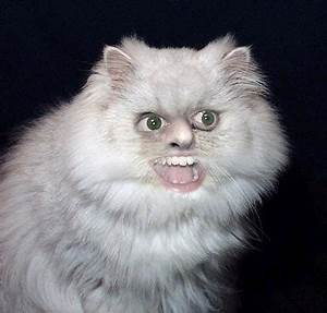 What breed of cat is this? | Yahoo Answers