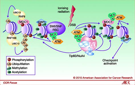 Modification To Dna by Epigenetic Modifications In Strand Dna Damage
