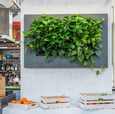 lebende pflanzenbilder kaufen lebende pflanzenbilder mit echten pflanzen kaufen