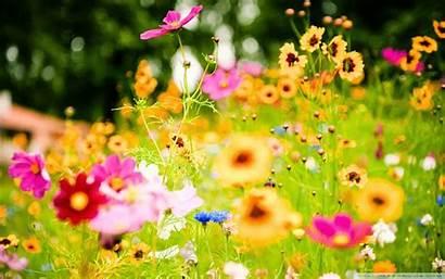 Flowers Summer Desktop Wallpapers Flower Backgrounds Computer