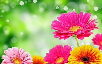 Bright Flower Mobile Wallpapers Android Desktop Pc