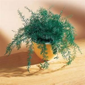 Plante Repulsif Mouche : sedao vente anti nuisibles animaux plante repousse insectes ~ Melissatoandfro.com Idées de Décoration