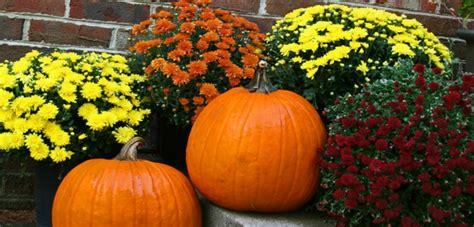 Herbst Garten Deko by Chrysantheme Im Herbst Wissenswertes Und N 252 Tzliche Tipps