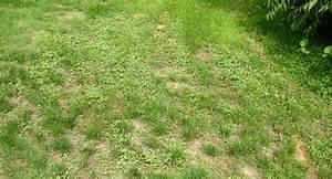 Tondre La Pelouse Sans Ramasser : quand tondre sa pelouse comment bien tondre sa pelouse quand tondre sa pelouse est il interdit ~ Melissatoandfro.com Idées de Décoration