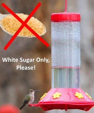 hummingbird food recipe    nectar