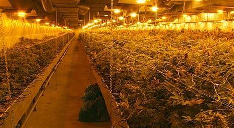 cannabis enqu 234 te sur les jardiniers de la p 232 gre
