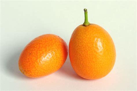 Kumquat Images File Kumquat 0245 Jpg Wikimedia Commons