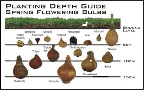 bulbs 187 nichol s garden ltd