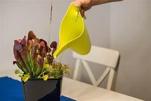 Fleischfressende Pflanze Pflege : gartenbau weilbrenner pflanzenpflege ~ A.2002-acura-tl-radio.info Haus und Dekorationen