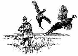 Pheasant Clip Art PG 1