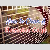 Robo Dwarf Hamster Cages | 1024 x 768 jpeg 948kB