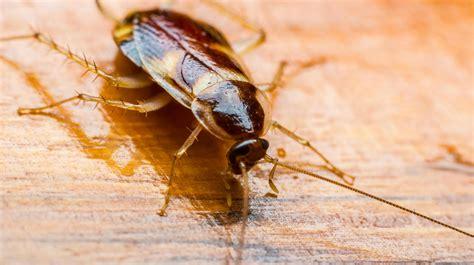 Schädlinge Maden, Ameisen Und Kakerlaken Bekämpfen