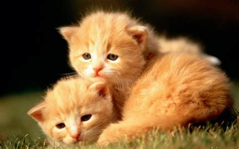 Baby Animal Wallpapers - baby animal wallpaper 183