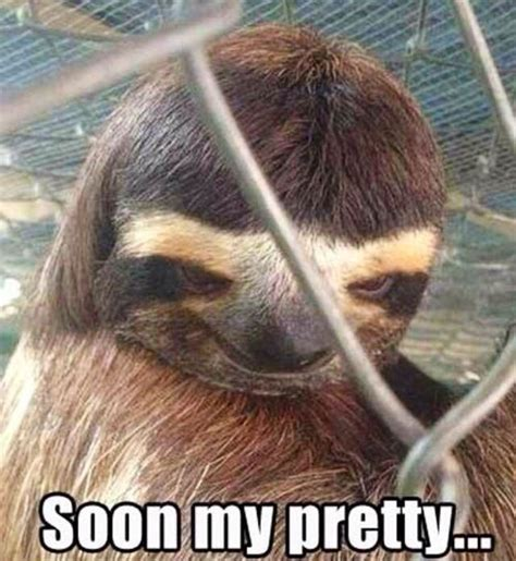 Creepy Sloth Meme - creepy sloth sloths the new black pinterest creepy sloth and sloths