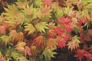 Trees for Multi-Season Color HGTV