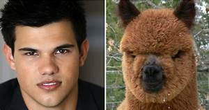 Here Are 16 Celebrities Who Look Like Animals