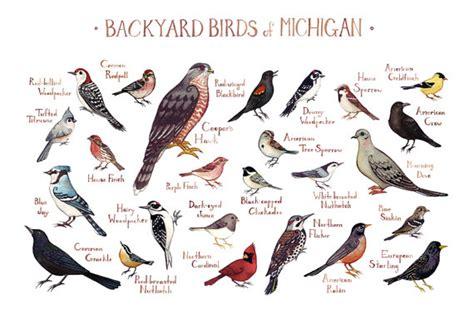 michigan backyard birds field guide art print watercolor