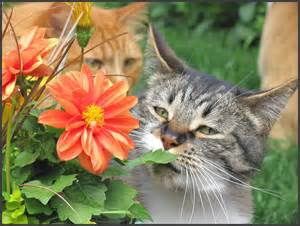 toxic plants for cats list of toxic plants for cats