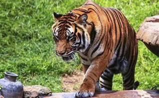 Animal Kingdom Theme Park Florida