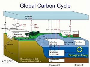 Phosphorus Sinks. Carbon Cycle Diagram From NASA UCAR ...