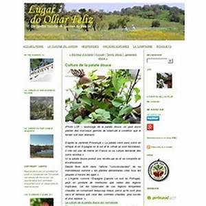 Culture De La Patate Douce : patate douce nature pearltrees ~ Carolinahurricanesstore.com Idées de Décoration