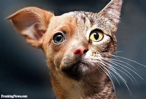 Cat and Dog Hybrid Pictures - Freaking News