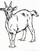 Goat Coloring sketch template