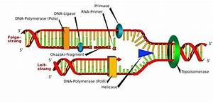 Dna And Rna Replication