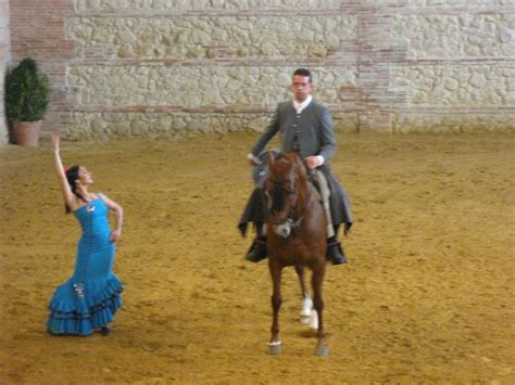 andalusian horses andalusia dance training spain breiner road cordoba trained shown they