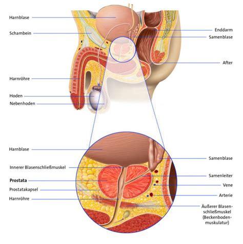 prostatakrebs metastasen psa wert